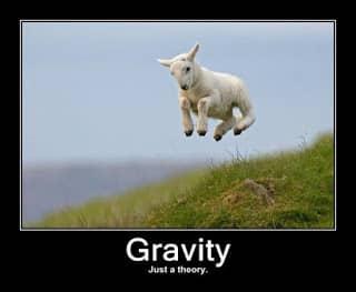 lamb gravity