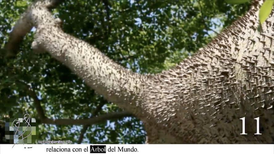 árbol mundo 1